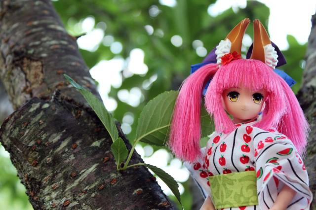 mini tama tree
